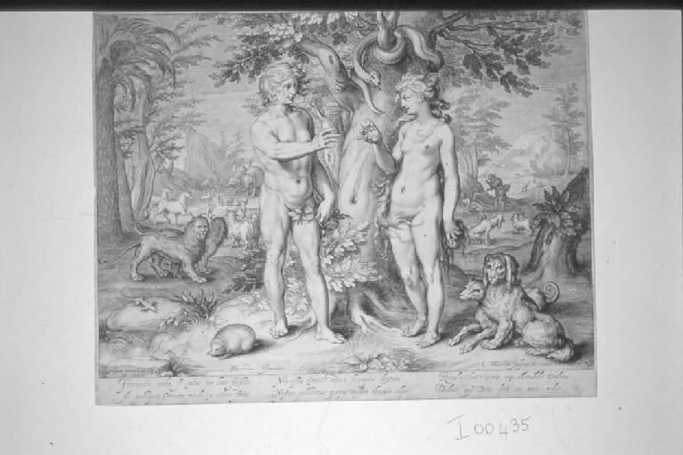 Adamo ed Eva nel Paradiso terrestre (stampa smarginata) di Matham Jacob, Goltzius Hendrick (sec. XVII)