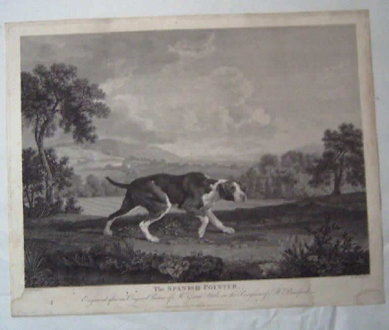 Pointer spagnolo (stampa) di Woollet William, Stubbs George (sec. XVIII)