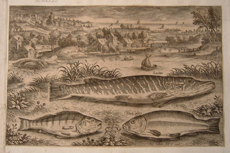 Pesci (stampa, serie) di Collaert Adriaen, Collaert Adriaen (sec. XVI)
