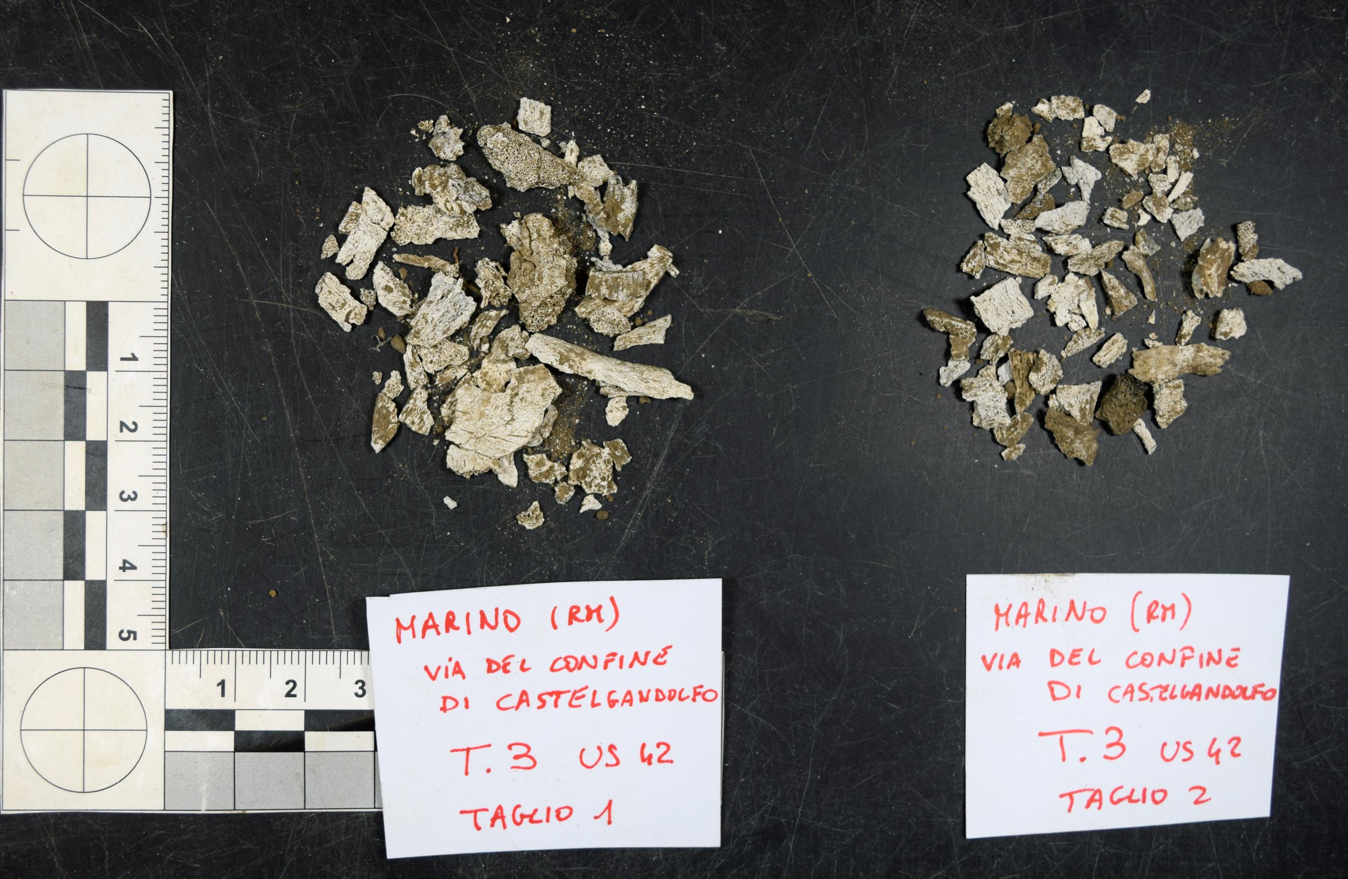reperti antropologici pertinenti a un unico individuo, reperto osteo-dentario (morfologia/ struttura alterata post mortem per intervento antropico, combusto) (Età del Bronzo finale)