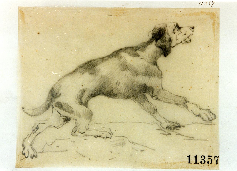 cane (disegno) - ambito napoletano (seconda metà sec. XIX)