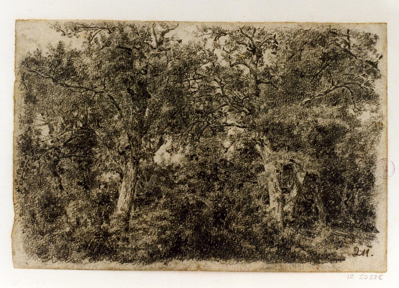 paesaggio con alberi (disegno) di Michetti Quintilio (sec. XIX)