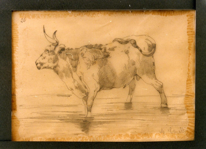 studio di mucca (disegno) di Carelli Consalvo (sec. XIX)