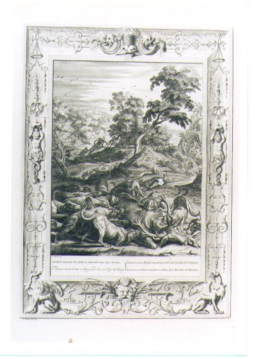 ATTEONE DIVORATO DAI CANI (stampa) di Picart Bernard (sec. XVIII)