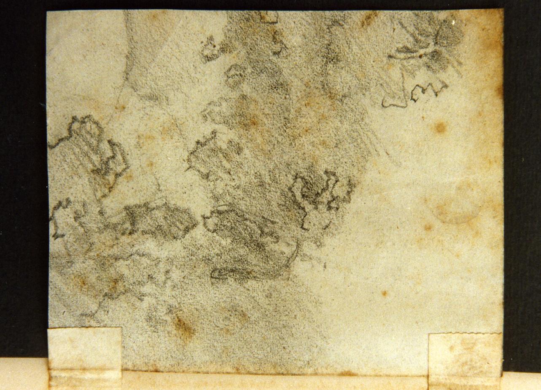 studio di vegetazione (disegno) di Meyer Ernst (sec. XIX)