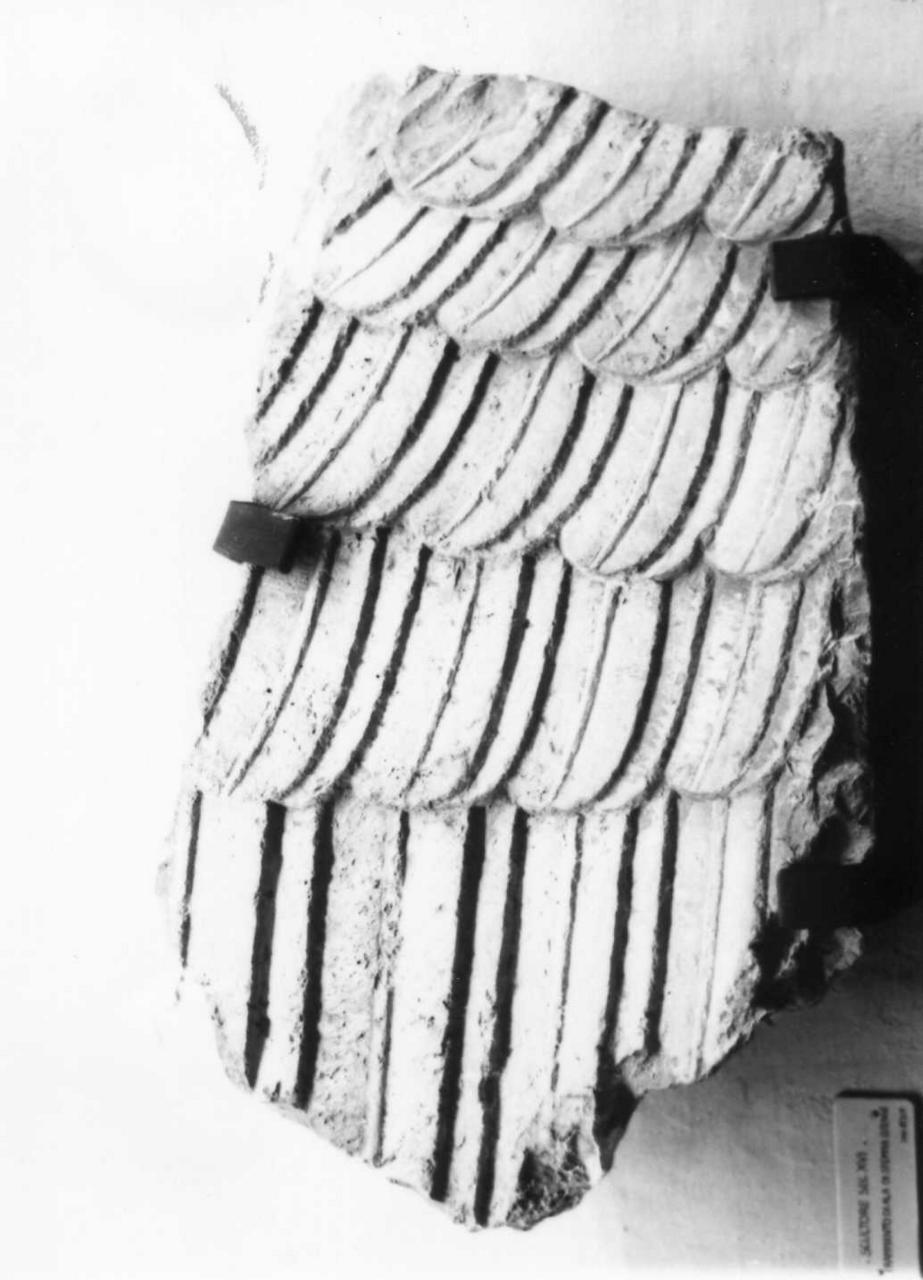 ala di aquila (scultura, frammento) - bottega emiliana (metà sec. XVI)