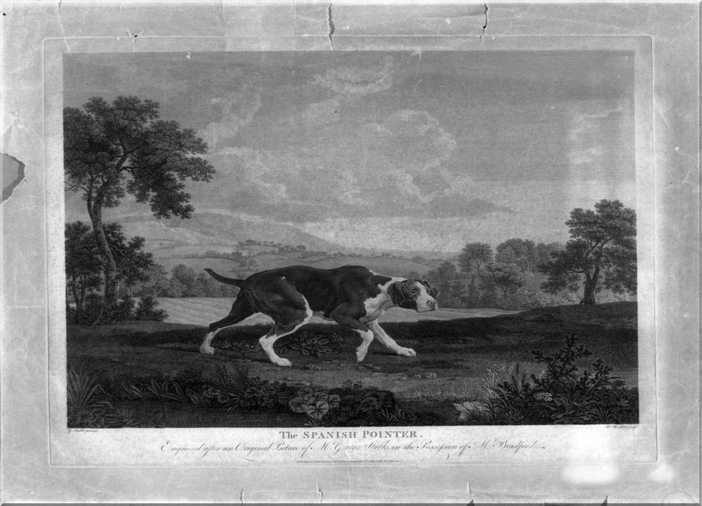 cane (stampa) di Stubbs George, Woollett William (sec. XVIII)