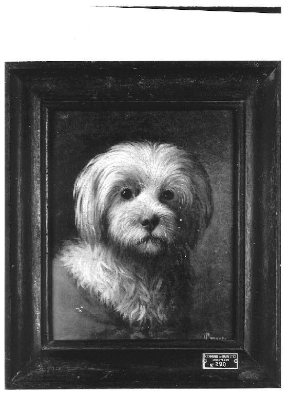 Studio di cane, cane (dipinto, opera isolata) di Levi Gioacchino (sec. XIX)