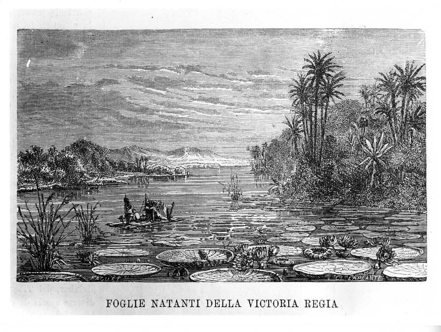 Foglie natanti della Victoria Regia, paesaggio fluviale (stampa) di Laplante Charles (attribuito), Faguet A (attribuito) (sec. XIX)
