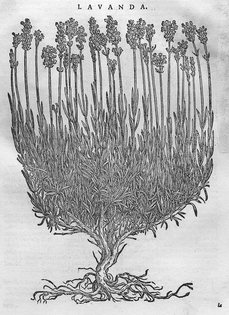 erbe mediche, animali e macchinari (stampa, serie) di Maierpeck Wolfango, Liberale Giorgio detto Gensio (sec. XVI)